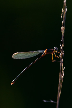 Damselfly Highlights